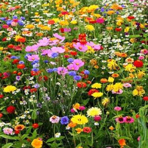 Free 2020 Roadsides in Bloom Calendar