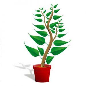 Free Tree Seedling