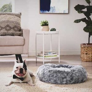 Free Dog Bed for Winners