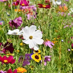 Free Cococare Wildflower Seed Paper